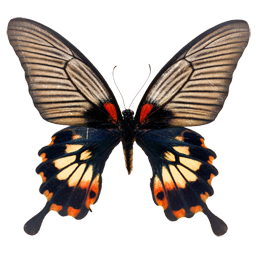 https://yoursmiles.org/i-butterfly.php?page=12""